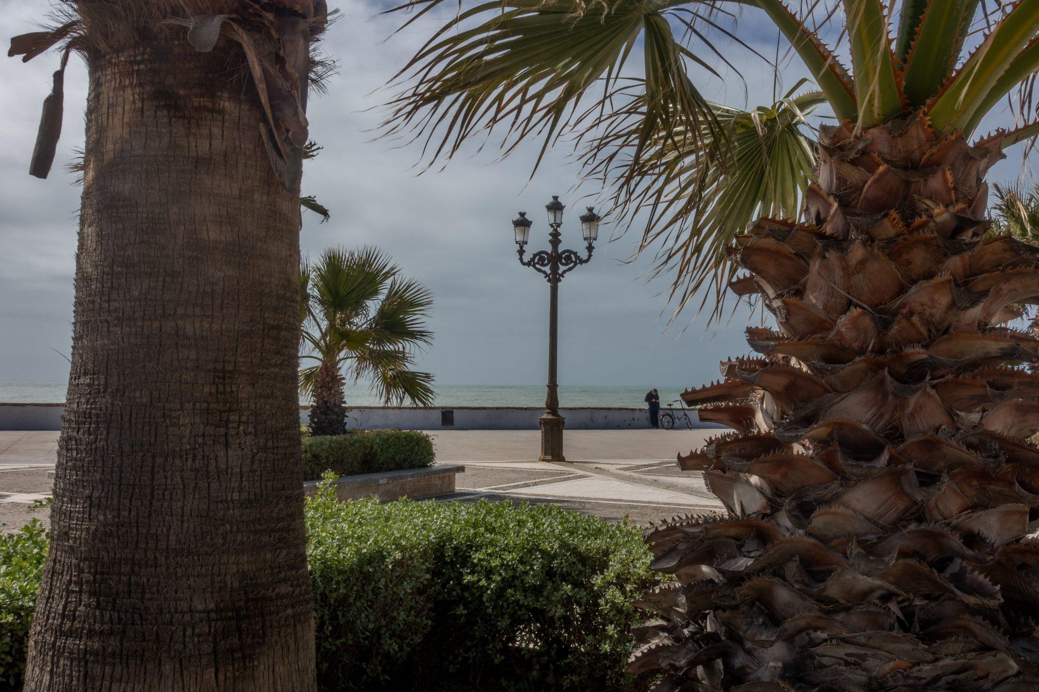 7-kleine-geheimtipps-cádiz-promenade-bäume.