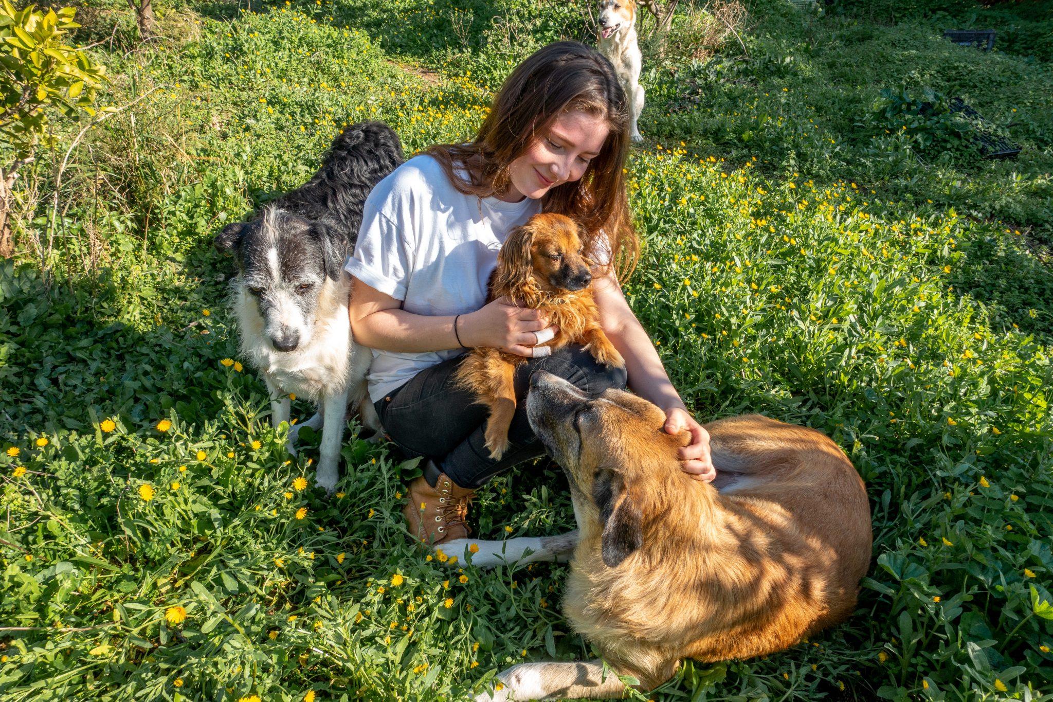 housesitting-guide-kostenlos-wohnen-andalusien-hunde