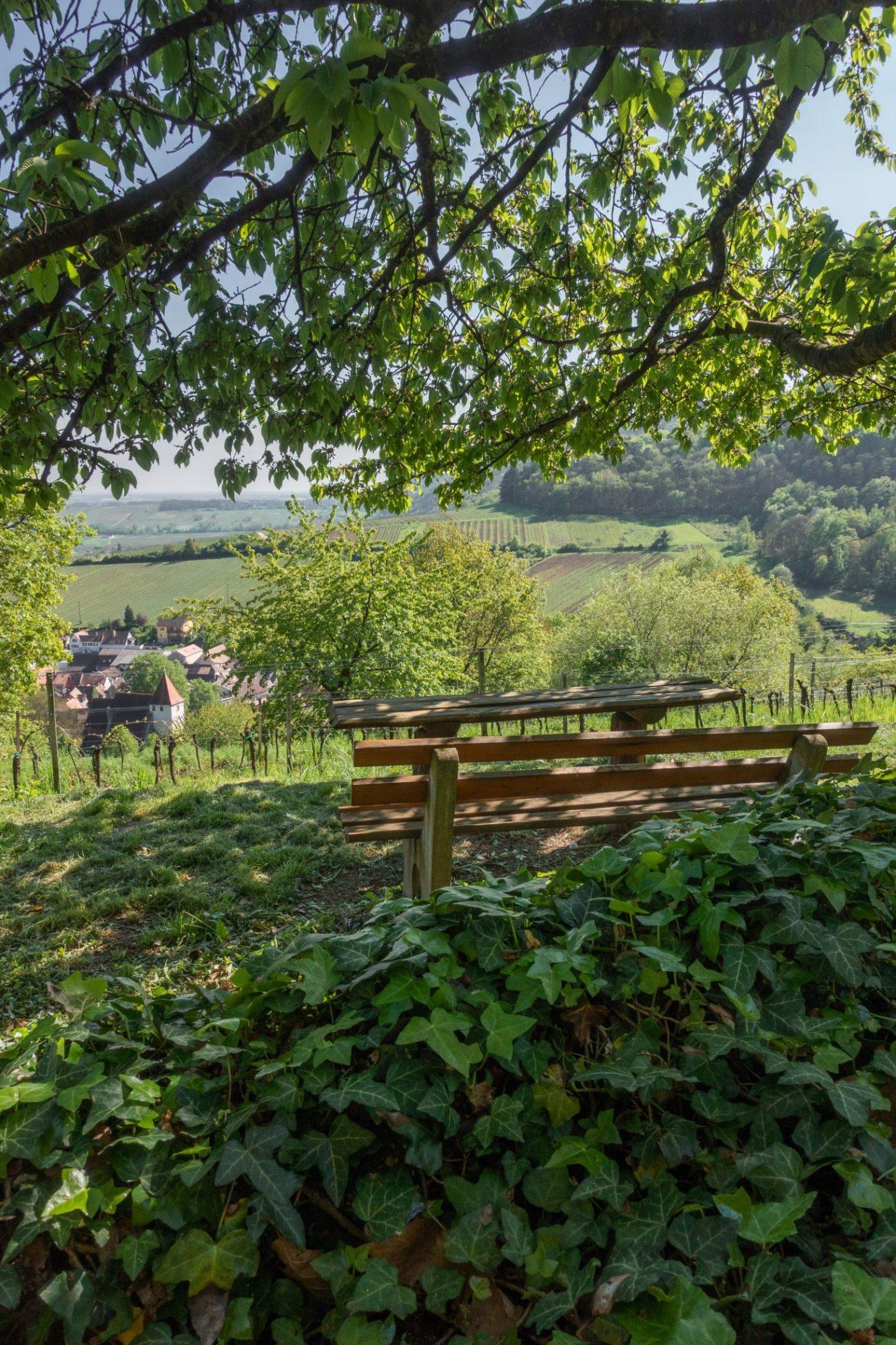 Landau-pfalz-burg-neukastel-wanderung-ausblick-leinsweiler