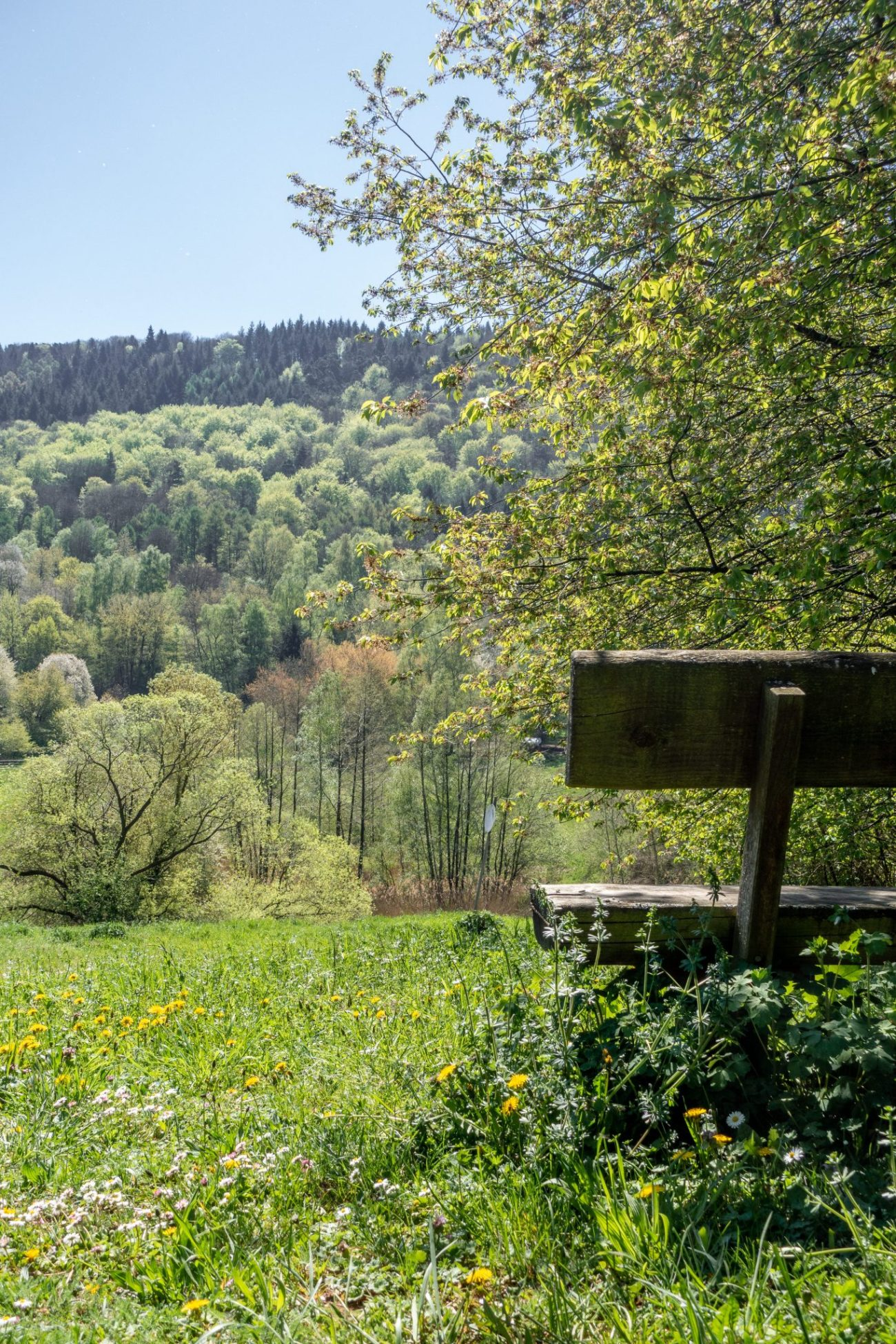 landau-pfalz-leinsweiler-spaziergang-bank
