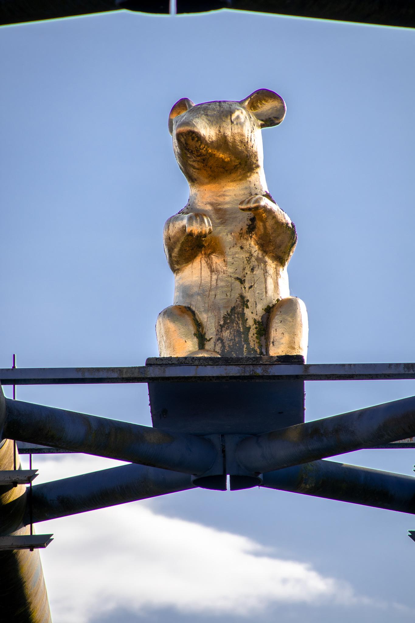 hameln-tipps-werder-insel-ratte-gold