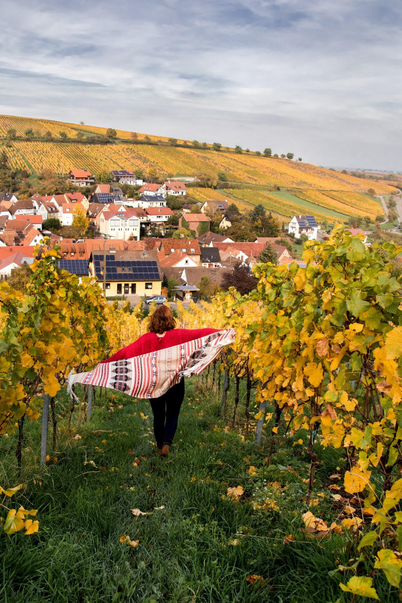 pfalz-weinberg-herbst