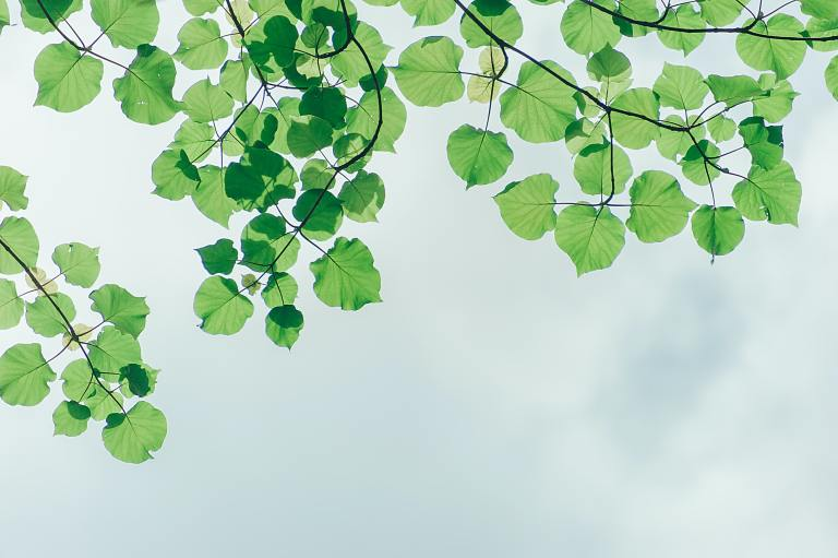 IFB and Sustainability