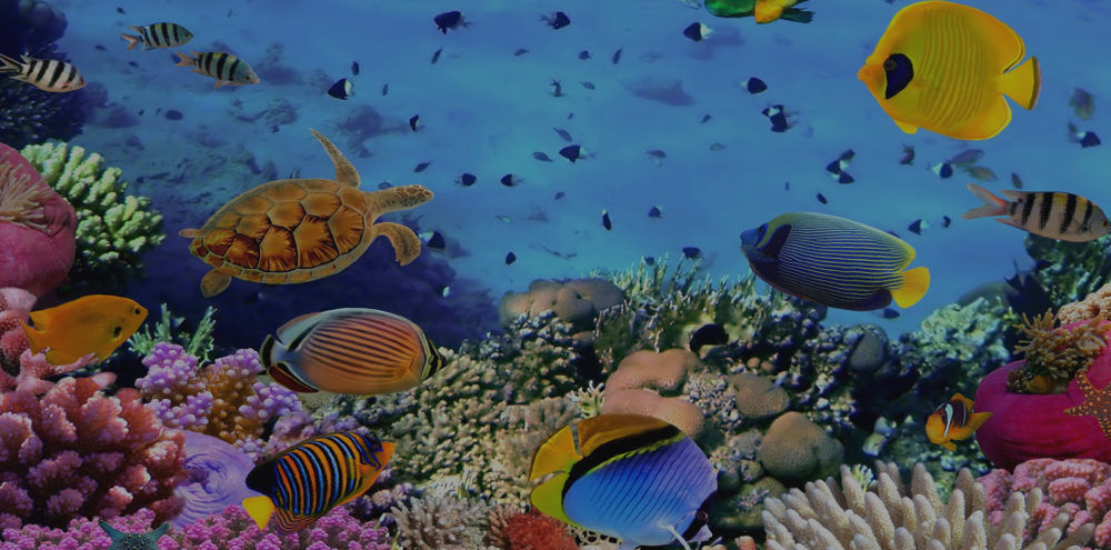Fish Pic1