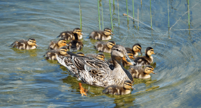 Proud_Mother___Flickr_-_Photo_Sharing_