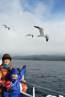 Lanche das gaivotas (uma sequência do voo em busca de bolacha)