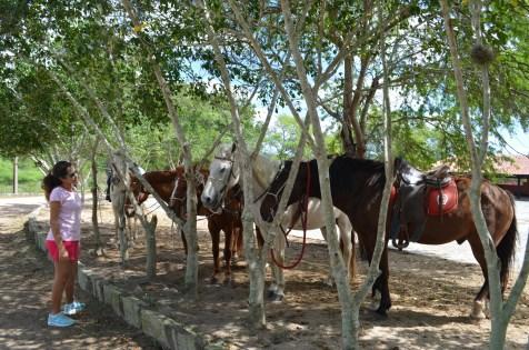 Conhecendo os cavalos