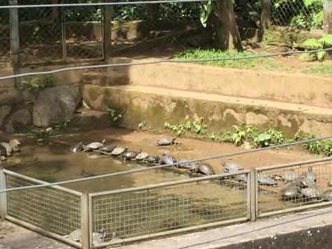 Jabutis e tartarugas