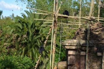 Macacos na Ásia