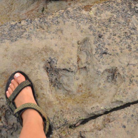 (C) Jule Reiselust: 130 Millionen alte Dinosaurierspuren am Gantheaume Point.