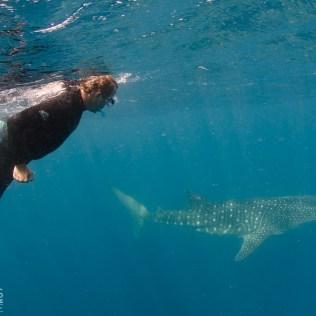 (C) Jule Reiselust: Ulli schwimmt mit dem Walhai.