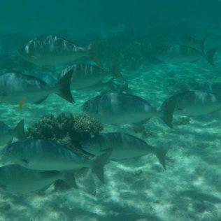 (C) Jule Reiselust: Fischschwarm