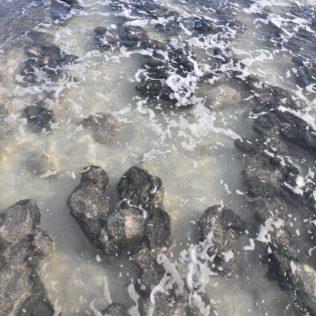 (C) Jule Reiselust: Stromatoliten - sehen aus wie Stein, sind aber Bakterien, die einst dazu beigetragen haben, dass die Erde eine Luftgefüllte Atmosphäre besitzt.