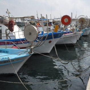 (C) Jule Reiselust: Fisxherbote im Hafen von Pafos