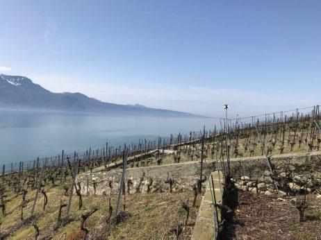 (C) Jule Reiselust: Weinterrassen von Lavaux.