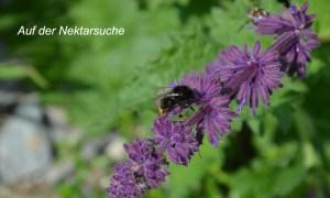 insekten bilder