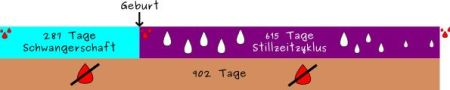 Stillzykluslaenge_1