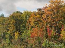 In den Wäldern von New Brunswick