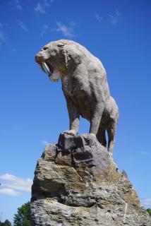 Die Urtiere Chiles im Park von Osorno