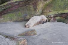 Robben am Wharaiki Beach