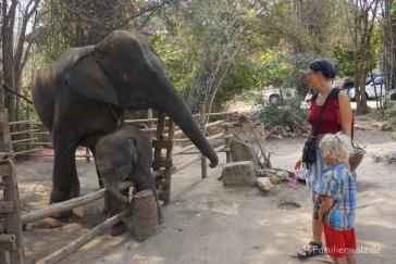 Im Elefantendorf Hua Hin