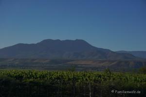 Dem Herzen folgen, Coquimbo streifen und in Pisco Elqui für immer bleiben wollen - Weinfelder auf dem Weg nach La Serena