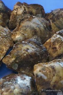 Austern in einer Perlenmanufaktur auf dem Weg in die Halong Bucht