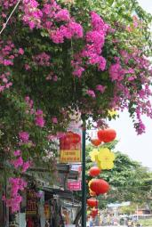 in Hoi An