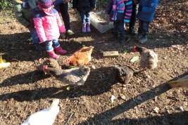 Besuch der Nestgruppe in einem Hühnerstall