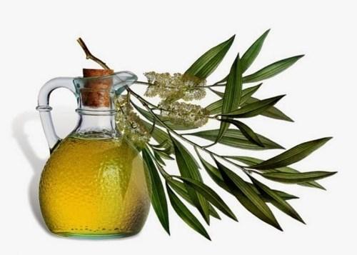 cara menghilangkan bekas jerawat dengan minyak pohon teh