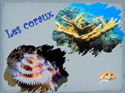 Les coraux – un PPS de Michel réalisé en 2019