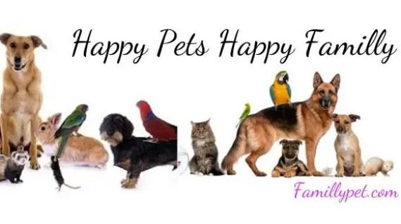 Happy pets Happy Familly