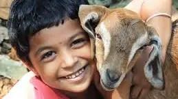 pets and humain health