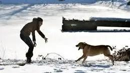 health benefits when adopting a pet