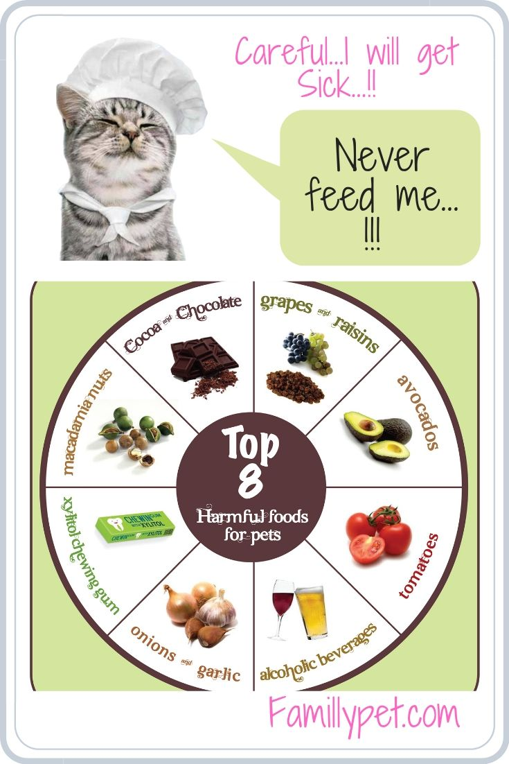 Human food that never give to a cat