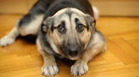 my dog is afraid how can i help him