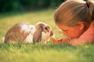 how to pick and adopt a Pet bunny , all the tips
