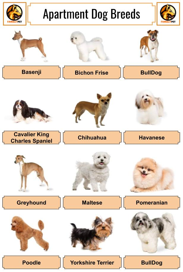 pics of the best dog breeds when you live in an apartment