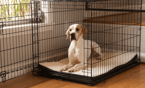 new puppy crate training guide