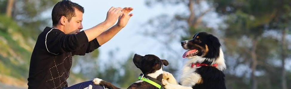 online behaviour training for puppies and dogs ?