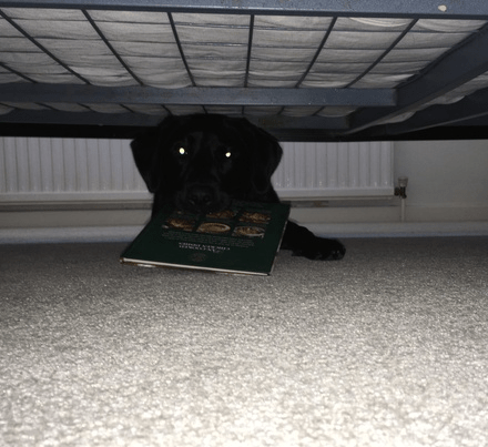 why my dog is hiding under the bed and how to help him stop this bad behaviour