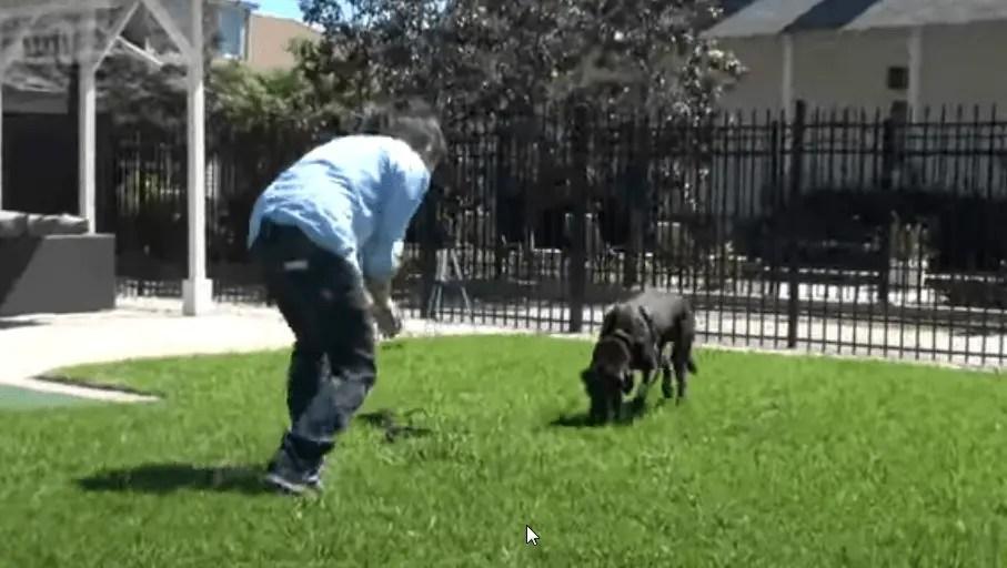 teach a dog to come