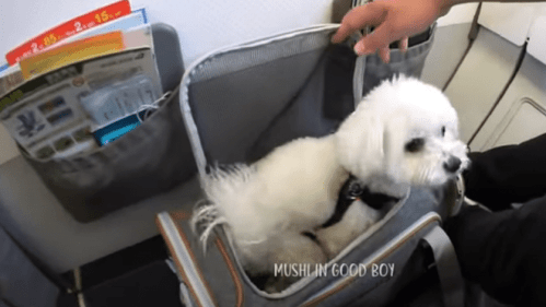 dog travel carrier and crate weight