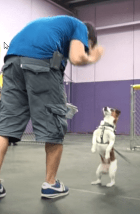 stop your dog from jumping , step by step dog training