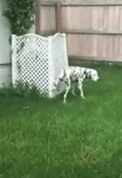 potty training my dog