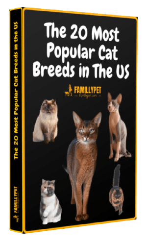 Cat breeds pdf