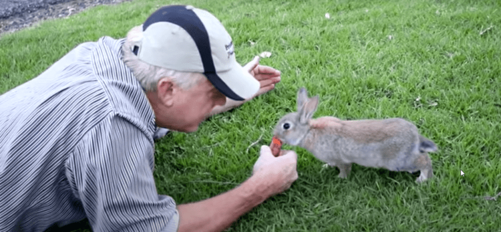rabbits life sxpectancy