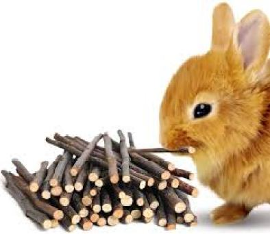 chew material for bunnies