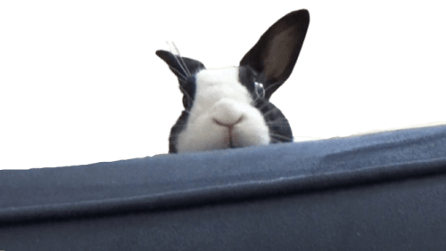 why is my rabbit scared of me at sudden ?