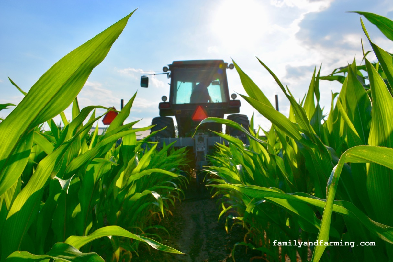 Cultivating Corn in Iowa